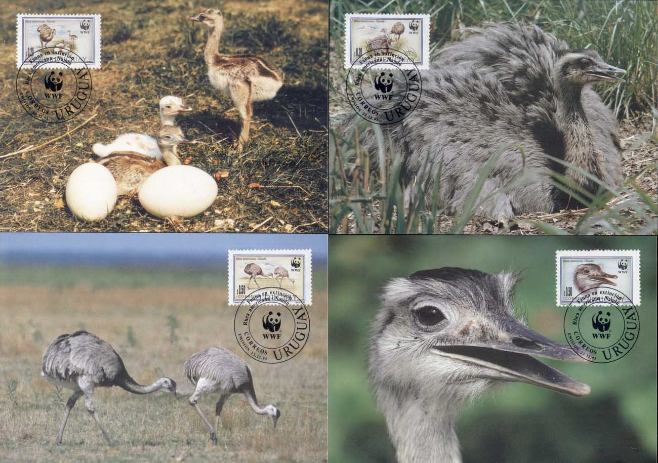 Uruguay 1993 WWF Greater Rhea, bird Maxicards