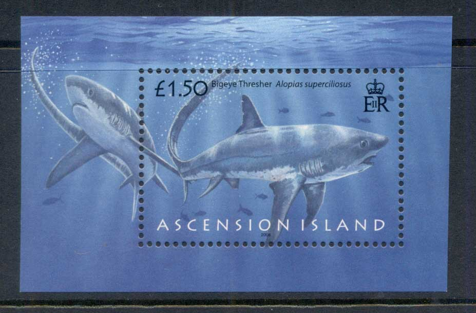 Ascension Is 2008 Marine Life, Sharks MS MUH